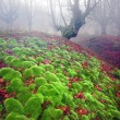 Stock Photo: Foggy forest with green sedimentary rocks with bubble shape