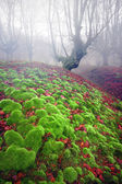 Foggy forest with green sedimentary rocks with bubble shape — Stock Photo