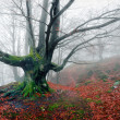 Creepy tree in foggy forest — Stock Photo