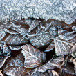 Winter background with frozen leaves — Stock Photo #36980077