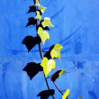 Creeper plant on a wall with leaf shadows — Stock Photo