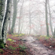 Forest with fog and a trail — Stock Photo