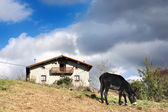 Typical basque country house with donkey — Stock Photo
