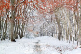 Forest with snow and red autumnal leaves — Zdjęcie stockowe