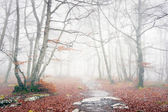 Trail in foggy forest on autumn — Stock Photo