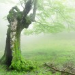 Stock Photo: Hollow tree in forest