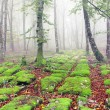 Stock Photo: Sedimentary rocks in foggy forest