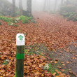 Wooden signpost in autumnal forest — Stock Photo