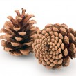 Pine cones isolated — Stock Photo