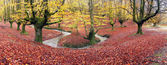 Panorama of forest in autumn — Stock Photo