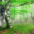 Forest with fog in spring — Stock Photo