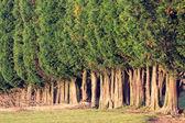 Grupo de marquesinas de árbol — Foto de Stock