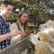 Couple at Petting Zoo — Stock Photo #25467325