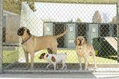 Pet Boarding — Stock Photo