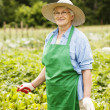 Senior woman gardening — Stock Photo #21908955