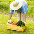 Senior woman picking up the box filled fresh vegetables — Stock Photo