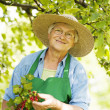 Senior checking a red currant bush — Stock Photo