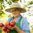 Royalty-Free Stock Photo: Senior woman holding tomatoes
