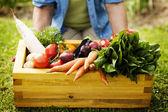 Låda fylld färsk grönsak — Stockfoto