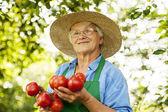 Senior woman with tomatoes — Stockfoto