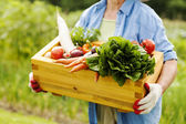 Senior woman holding box with vegetable — Stock Photo