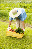 Senior woman picking up the box filled fresh vegetables — Stockfoto