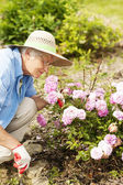 Senior woman with flowers in garden — Stock Photo