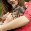 Stock Photo: Cute puppy on woman's arms