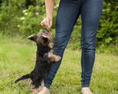 Woman feeding puppy — Stockfoto