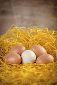 Few eggs — Stock Photo