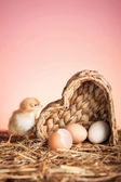 Chicken with eggs — Stockfoto