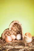 Springtime with small chicken — Stok fotoğraf