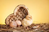 Pollo piccolo — Foto Stock