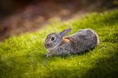 Rabbit in the grass — Stockfoto