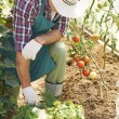 Man Hard work in garden — Stock Photo #50976053