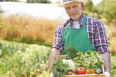 Man with his harvest — Stock Photo