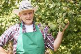 Mature male farmer — Stock Photo