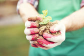 Seedling cupped in hands — Stock Photo