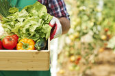 Box with ripe vegetables — Stock Photo