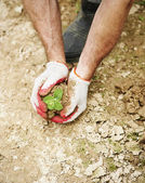 Hope to new life in the drought — Stock Photo