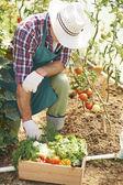 Man Hard work in garden — Stock Photo