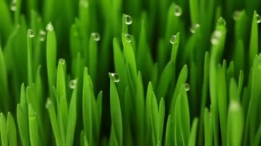 Drops of dew on the grass — Stock Video