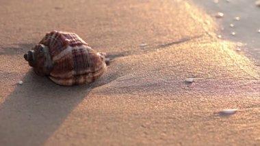 Seashell on the beach — Stock Video