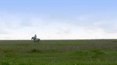 Cavaliere solitario — Video Stock