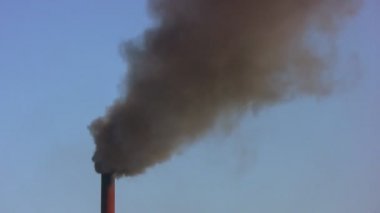 Environmentalists want to cry — Stock Video