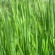 Royalty-Free Stock Vector Image: Background with grass