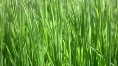 Background with grass — Stock Video