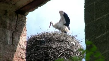 Stork on the Roof — Stock Video