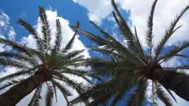 Two palm trees and sky with clouds — Stock Video