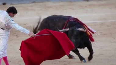 Work bullfighter with bull. Close-up — Stock Video